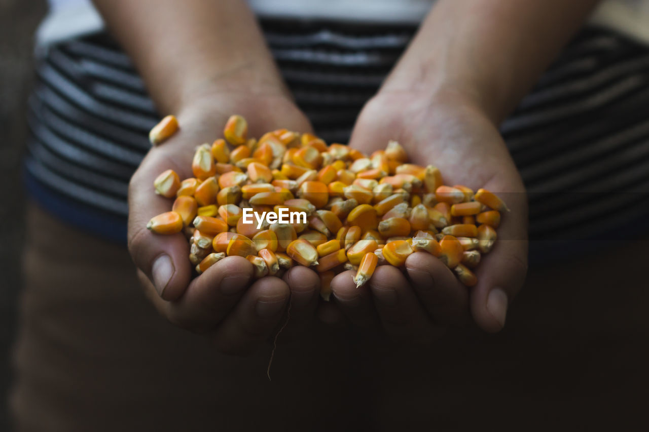 Midsection Of Man Holding Sweetcorns