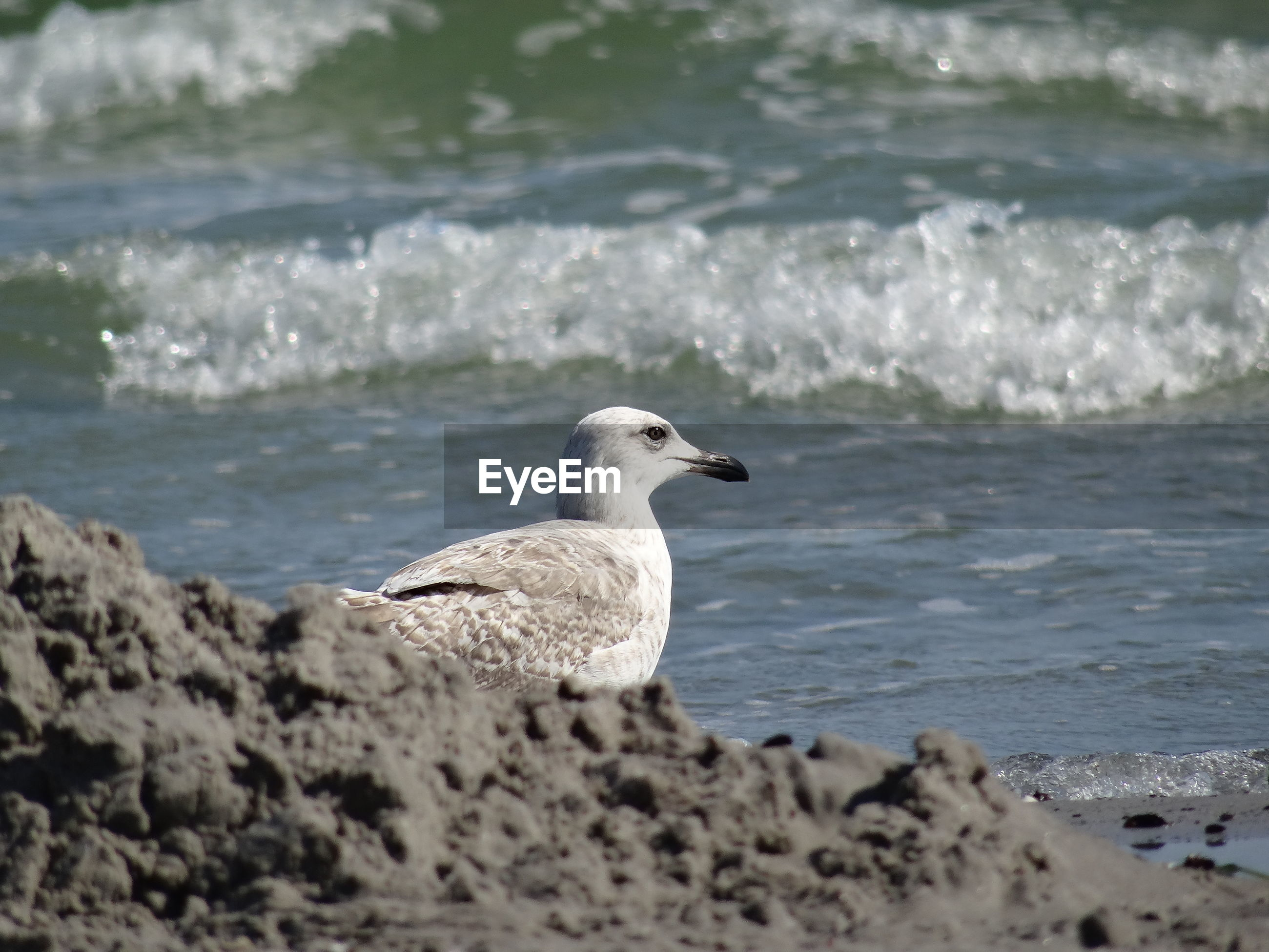 Side view of birds against water