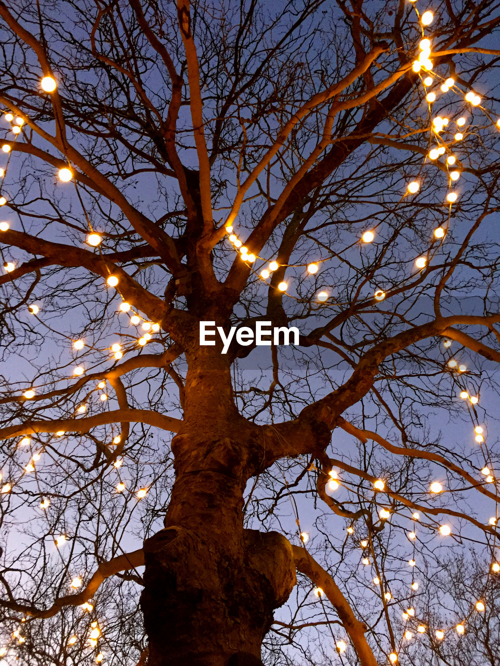 Low angle view of bare tree against sky at night