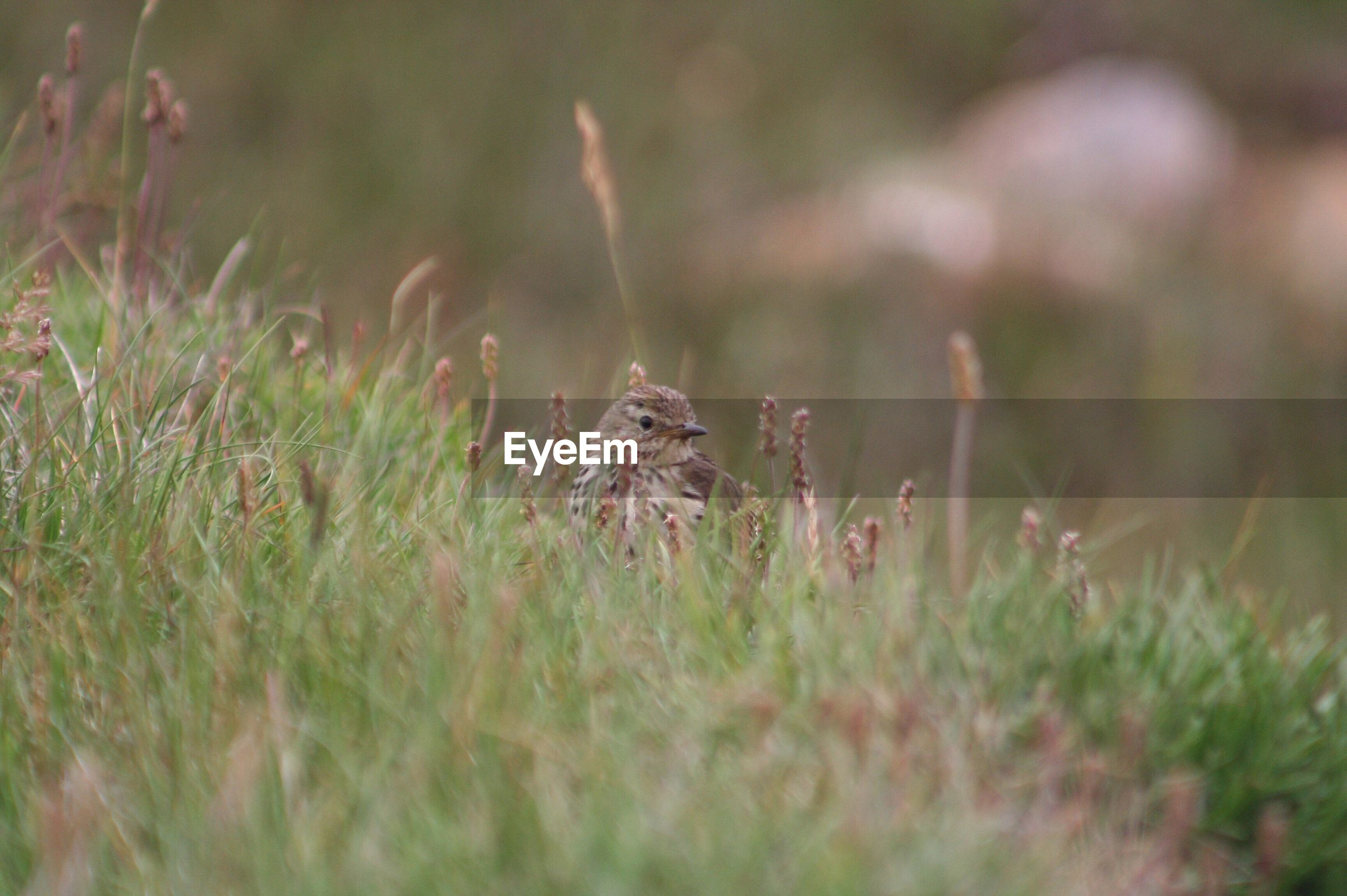 selective focus, plant, growth, grass, nature, focus on foreground, field, close-up, fragility, beauty in nature, outdoors, day, no people, stem, tranquility, green color, growing, grassy