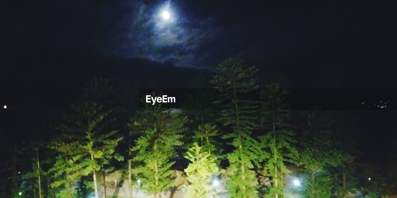night, tree, plant, moon, growth, illuminated, beauty in nature, sky, nature, no people, outdoors, low angle view, tranquility, full moon, green color, dark, moonlight, glowing, scenics - nature, astronomy