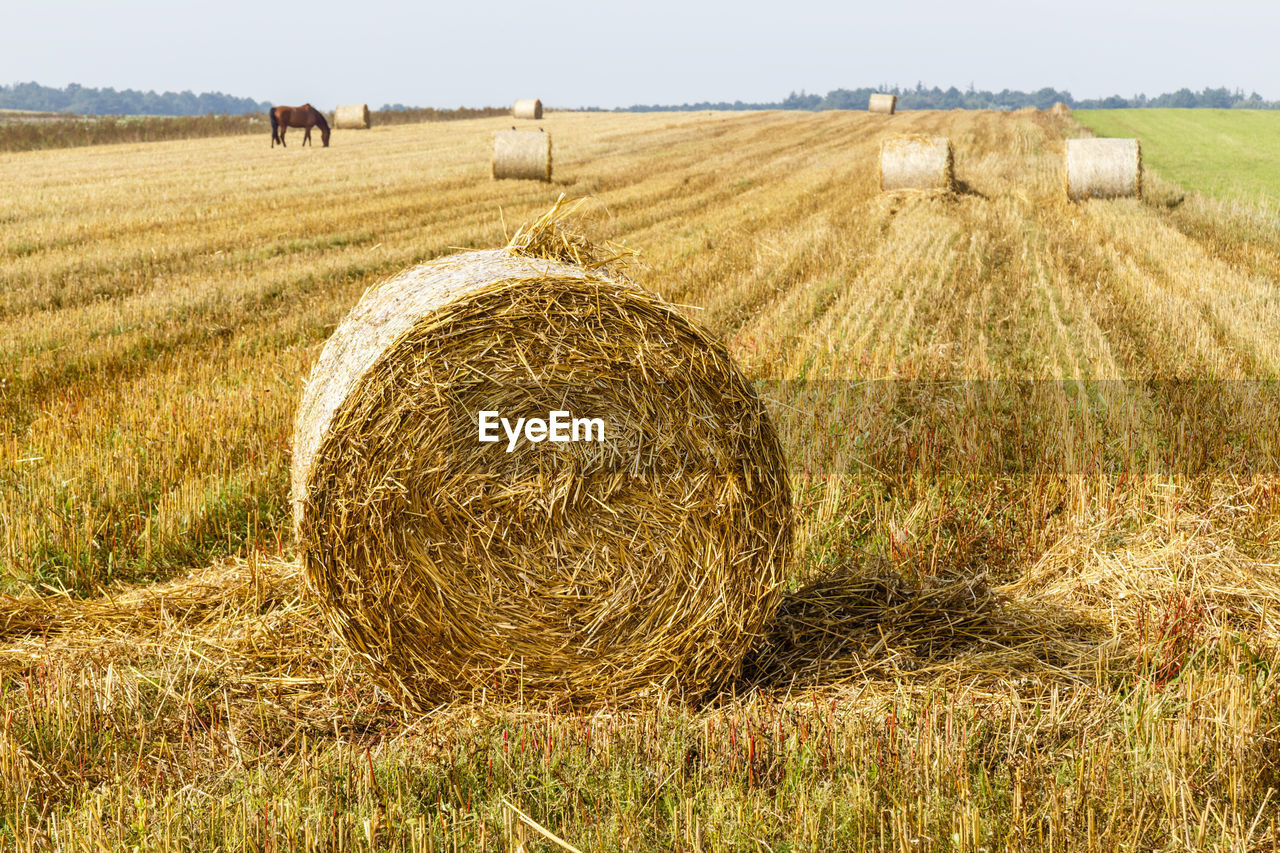 agriculture, field, land, bale, landscape, hay, rural scene, farm, environment, plant, tranquil scene, tranquility, harvesting, grass, nature, day, rolled up, beauty in nature, no people, scenics - nature, outdoors