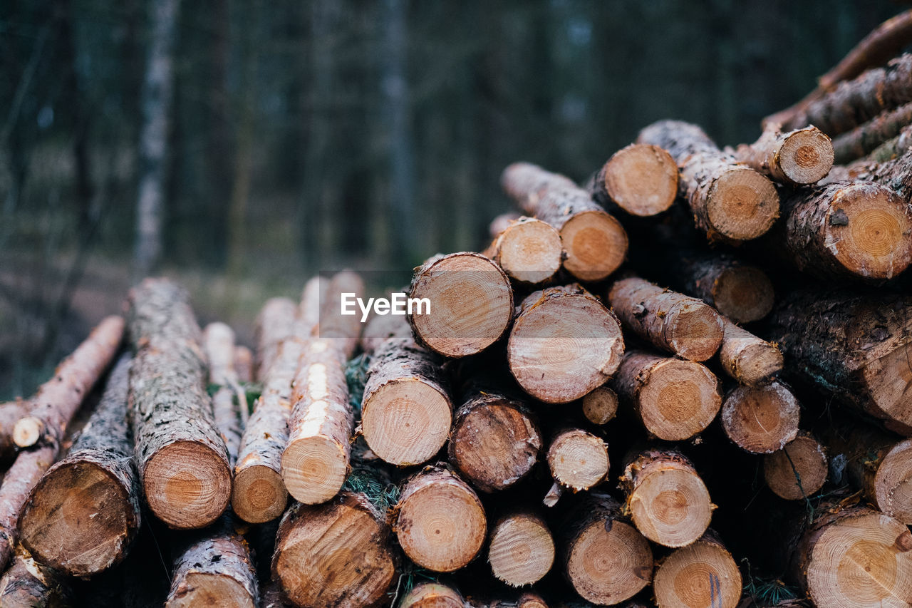 Close-Up Of Logs