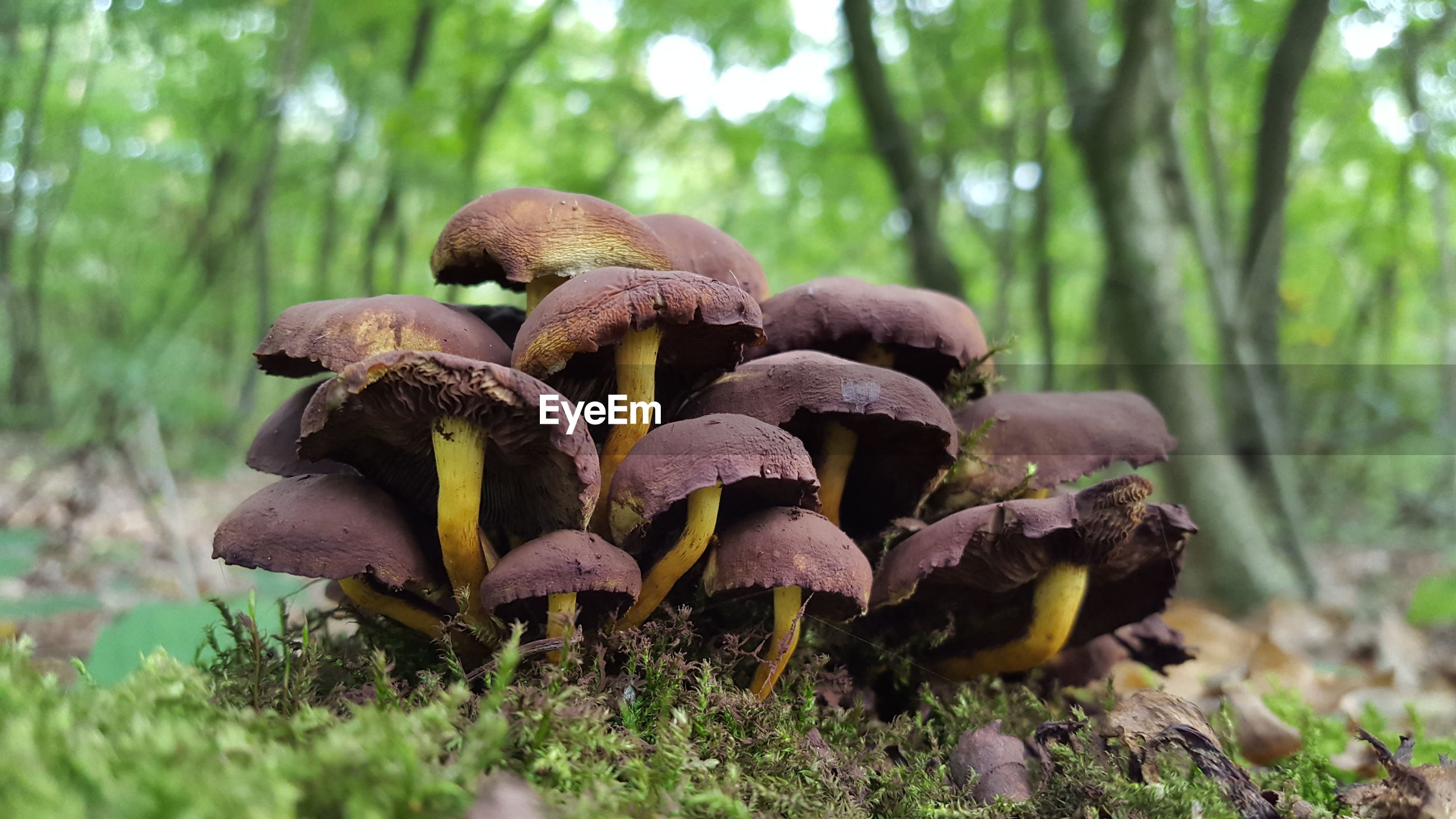 CLOSE-UP OF MUSHROOMS GROWING ON FIELD IN FOREST