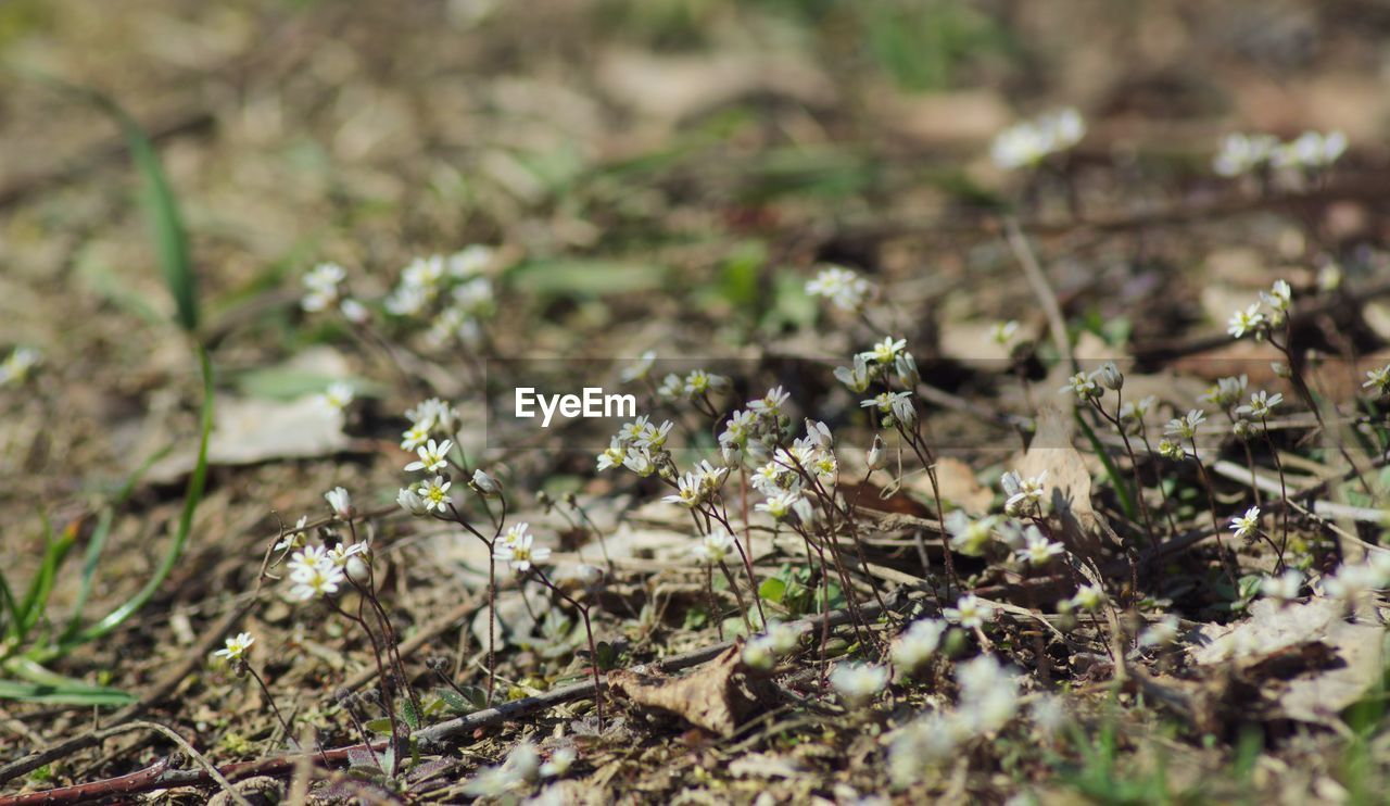 nature, plant, growth, no people, insect, outdoors, day, beauty in nature, fragility, close-up