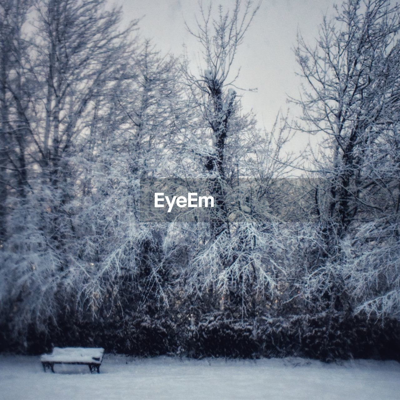 tree, snow, winter, cold temperature, plant, nature, forest, bare tree, bench, snowing, branch, land, frozen, no people, day, tranquility, storm, beauty in nature, scenics - nature, extreme weather, blizzard, park bench