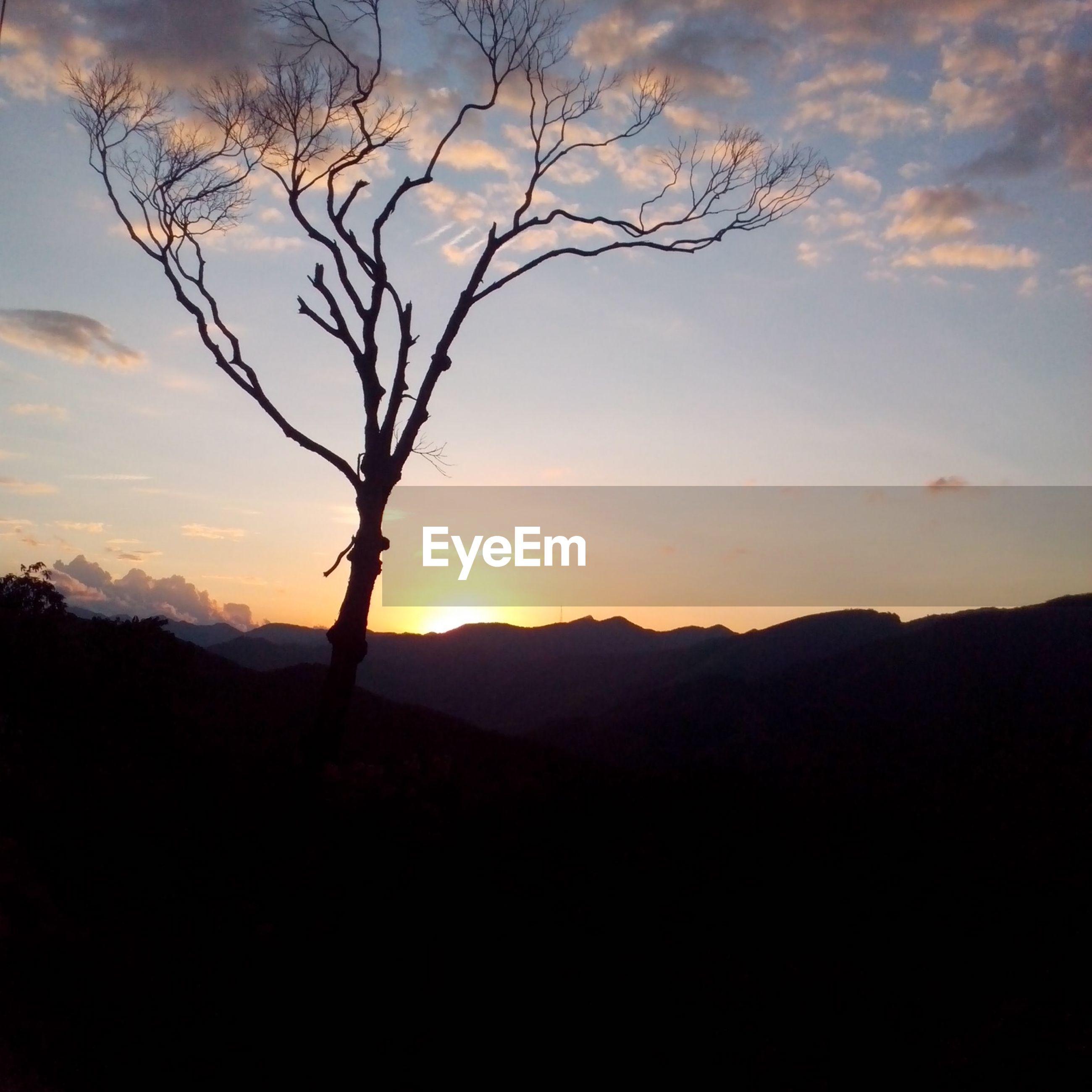 silhouette, tranquil scene, tranquility, sunset, scenics, beauty in nature, mountain, sky, landscape, nature, tree, mountain range, bare tree, idyllic, branch, non-urban scene, non urban scene, remote, majestic, cloud