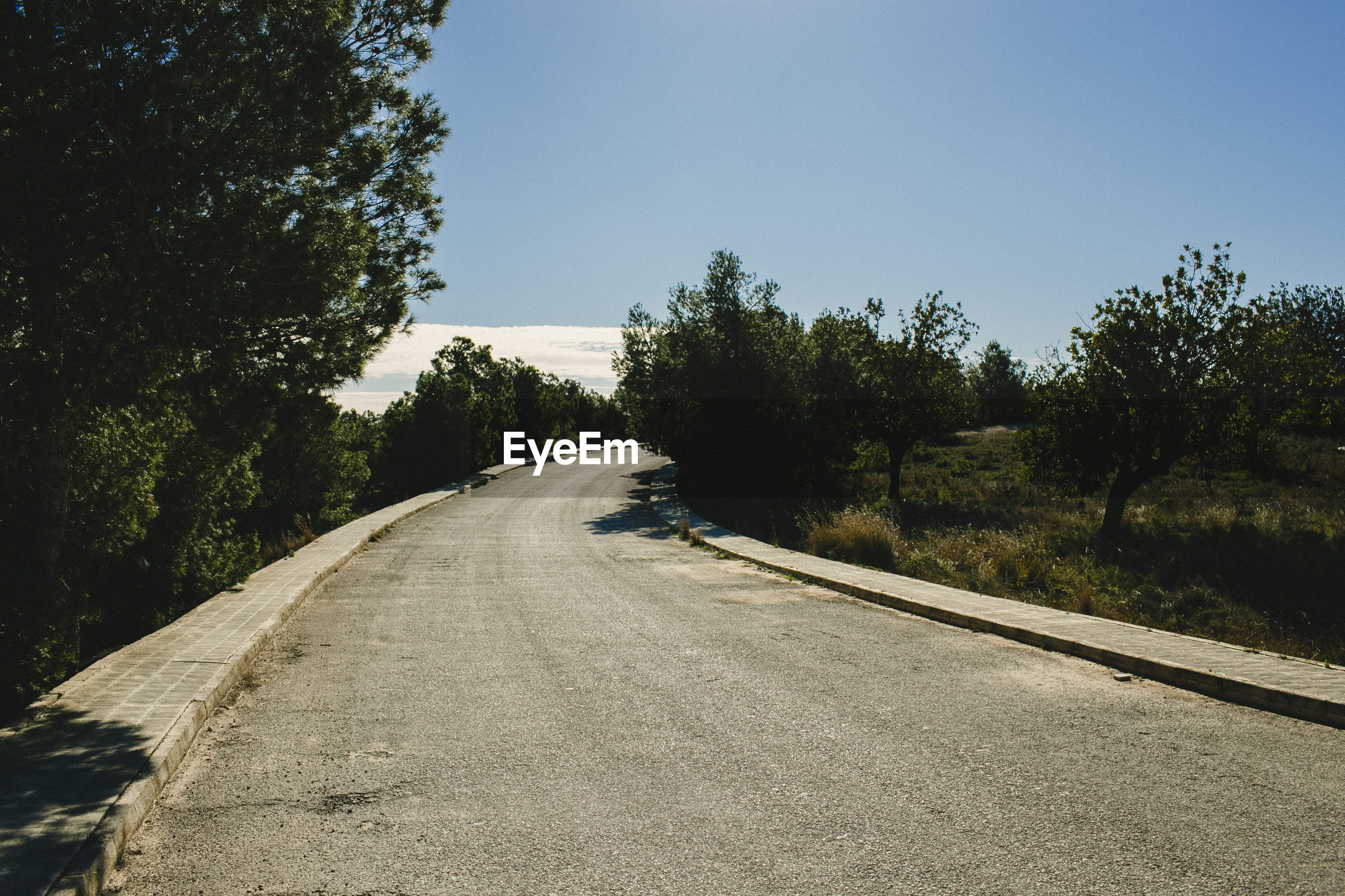 Empty road along trees and plants