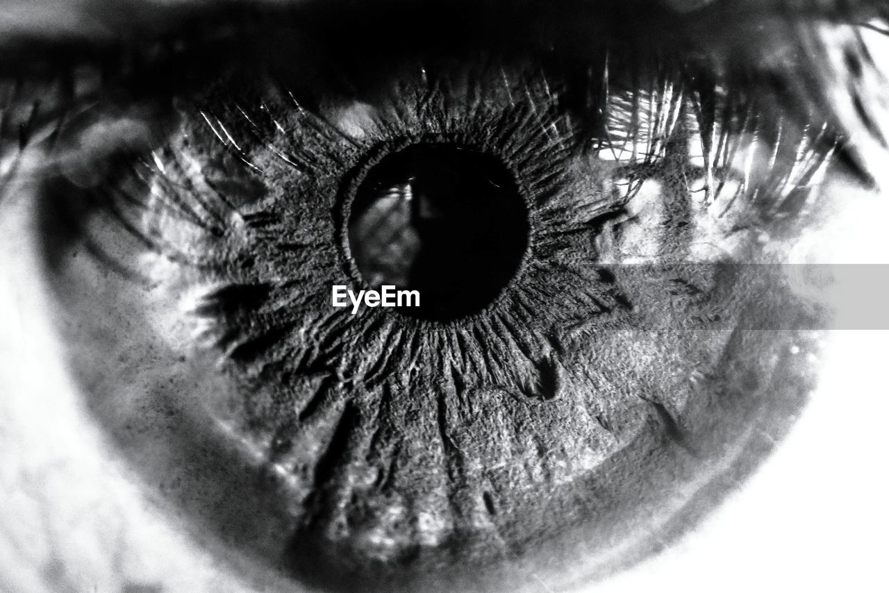 sensory perception, eyesight, eye, eyelash, close-up, human eye, human body part, extreme close-up, body part, one person, iris - eye, eyeball, real people, unrecognizable person, portrait, macro, looking at camera, eyebrow, selective focus, human face, eyelid