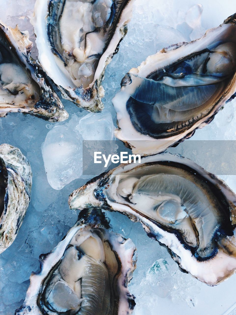 seafood, raw food, wellbeing, food, animal, cold temperature, freshness, food and drink, fish, ice, no people, vertebrate, healthy eating, full frame, oyster, close-up, shell, for sale, high angle view, animal wildlife, fish market, sale, fishing industry, marine