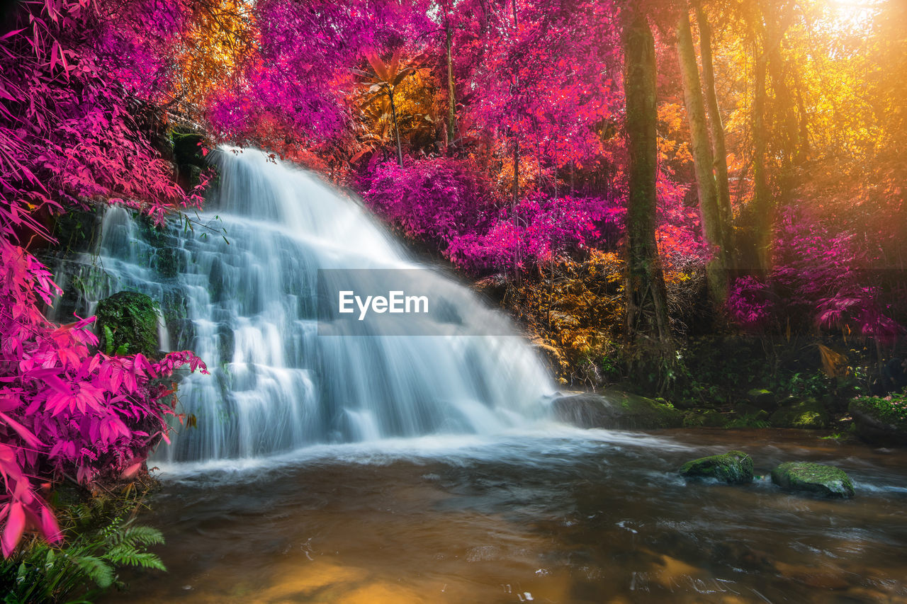 water, beauty in nature, motion, flowing water, scenics - nature, tree, waterfall, long exposure, plant, nature, blurred motion, forest, no people, flowing, autumn, waterfront, power in nature, day, non-urban scene, outdoors, rainforest, change, stream - flowing water