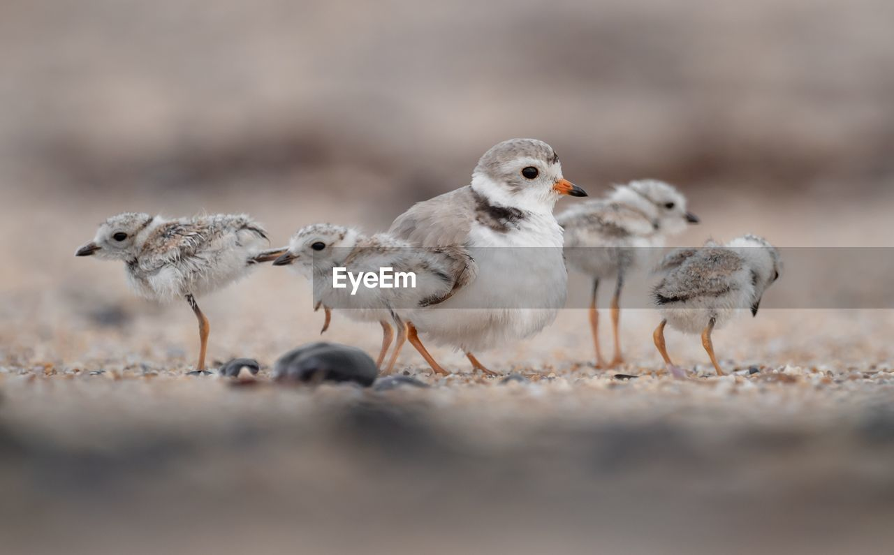 Close-Up Of Young Birds Perching On Land