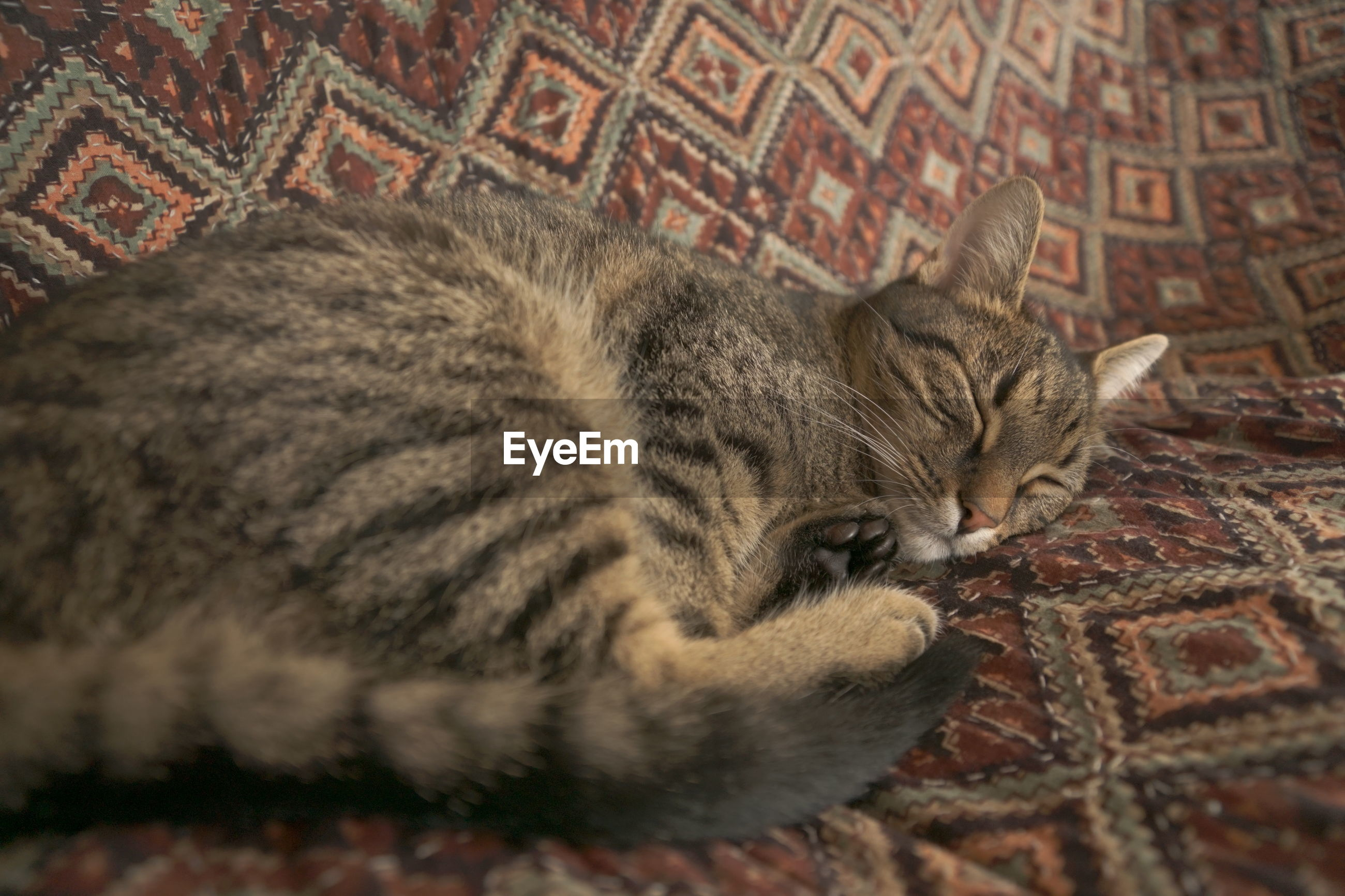 CLOSE-UP OF A CAT SLEEPING ON A BED
