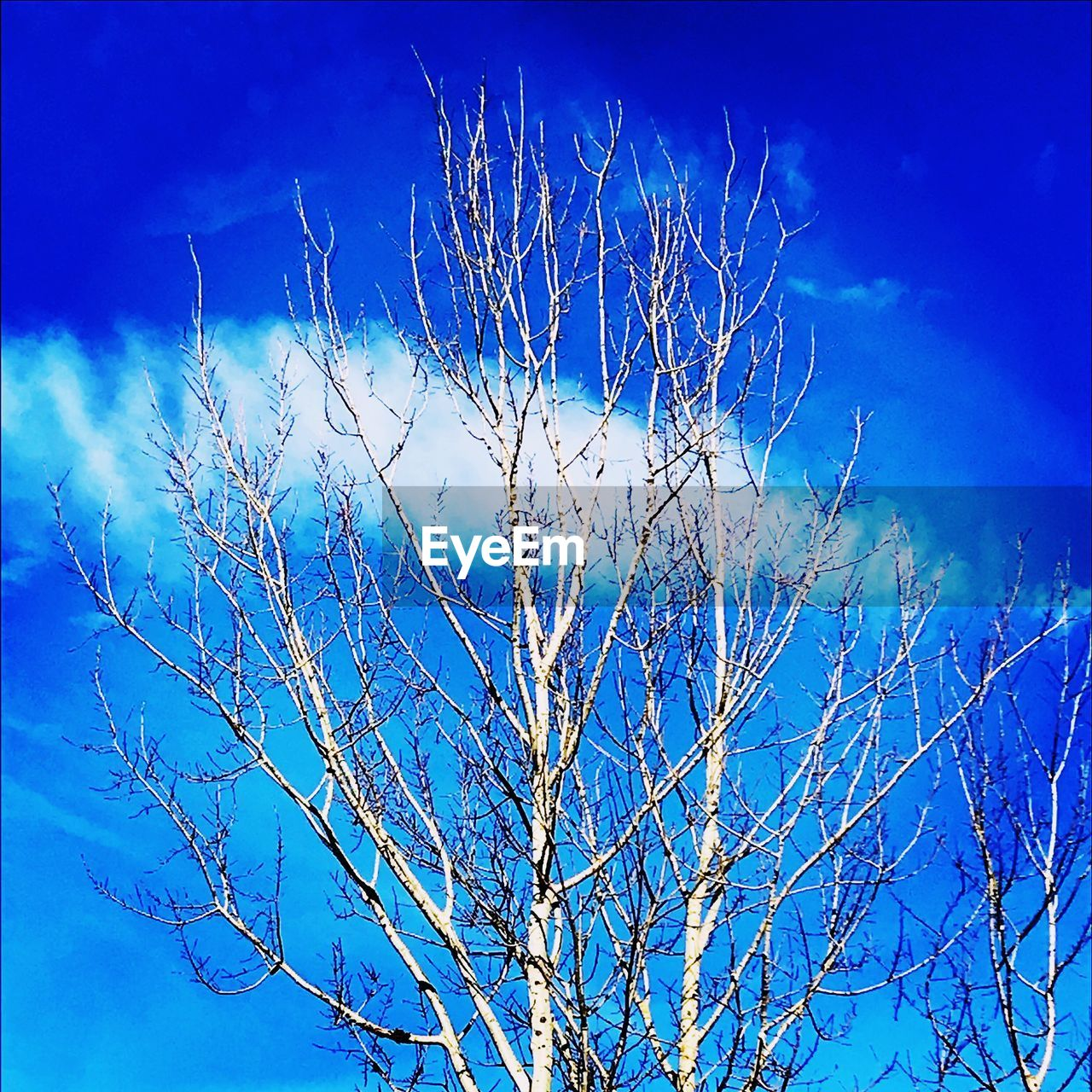 blue, sky, plant, nature, low angle view, tree, branch, no people, cloud - sky, growth, beauty in nature, bare tree, tranquility, day, outdoors, sunlight, bare, scenics - nature, spring, flowering plant, dead plant