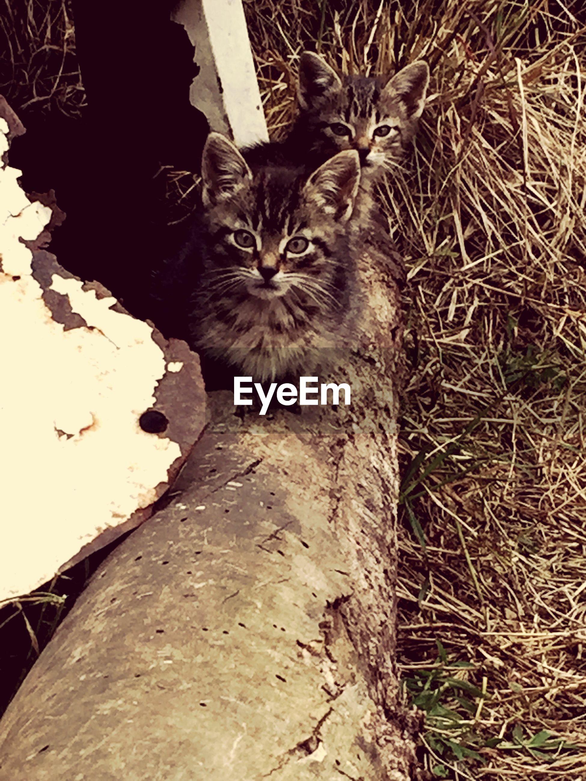 Portrait of kittens on field