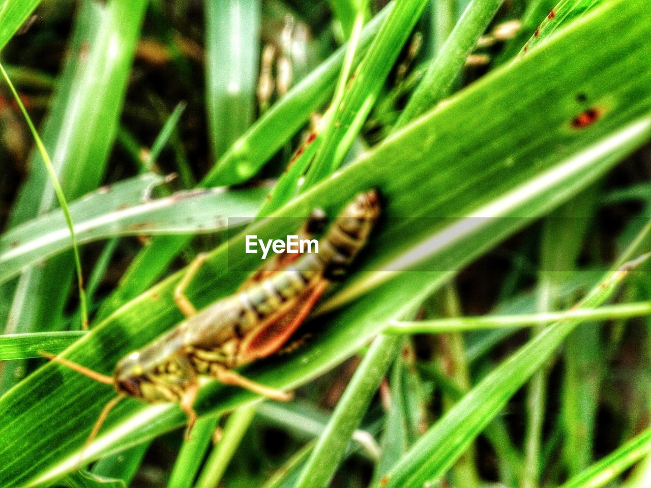 one animal, animals in the wild, animal themes, insect, green color, animal wildlife, wildlife, nature, no people, outdoors, day, plant, close-up, growth, leaf, grass