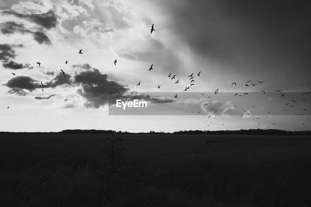 sky, animal, animal themes, animal wildlife, flying, bird, vertebrate, large group of animals, animals in the wild, group of animals, cloud - sky, flock of birds, beauty in nature, land, nature, landscape, field, mid-air, plant, environment, no people