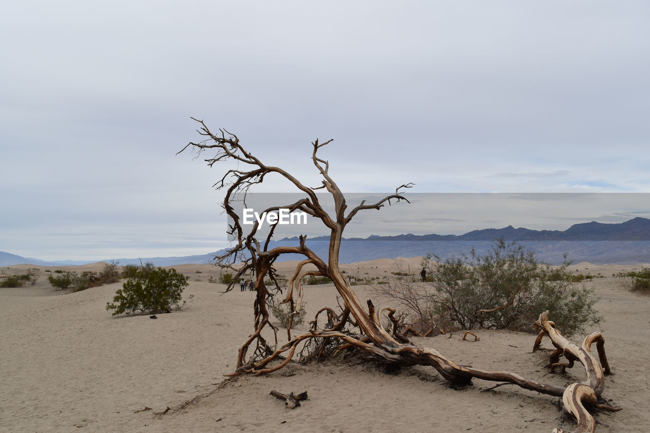 sand, nature, tranquility, tree, sky, dead plant, tranquil scene, outdoors, day, scenics, no people, landscape, beauty in nature, arid climate, branch, dead tree, desert, mountain, bare tree, sand dune