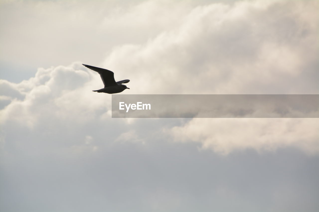 cloud - sky, bird, animal, animal themes, animal wildlife, one animal, animals in the wild, flying, sky, vertebrate, low angle view, spread wings, no people, mid-air, beauty in nature, nature, day, silhouette, outdoors, scenics - nature