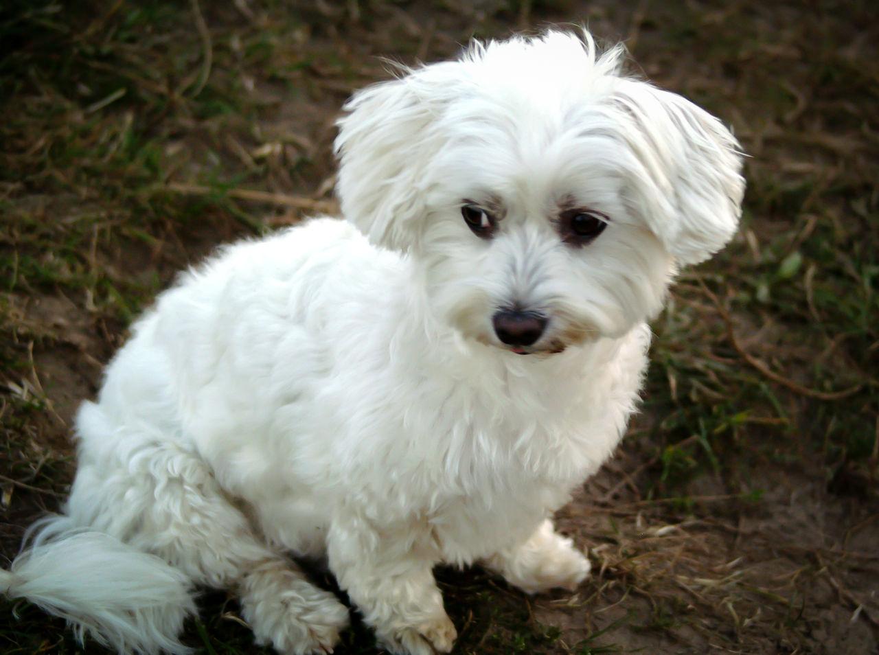 Close-Up Of White Dog