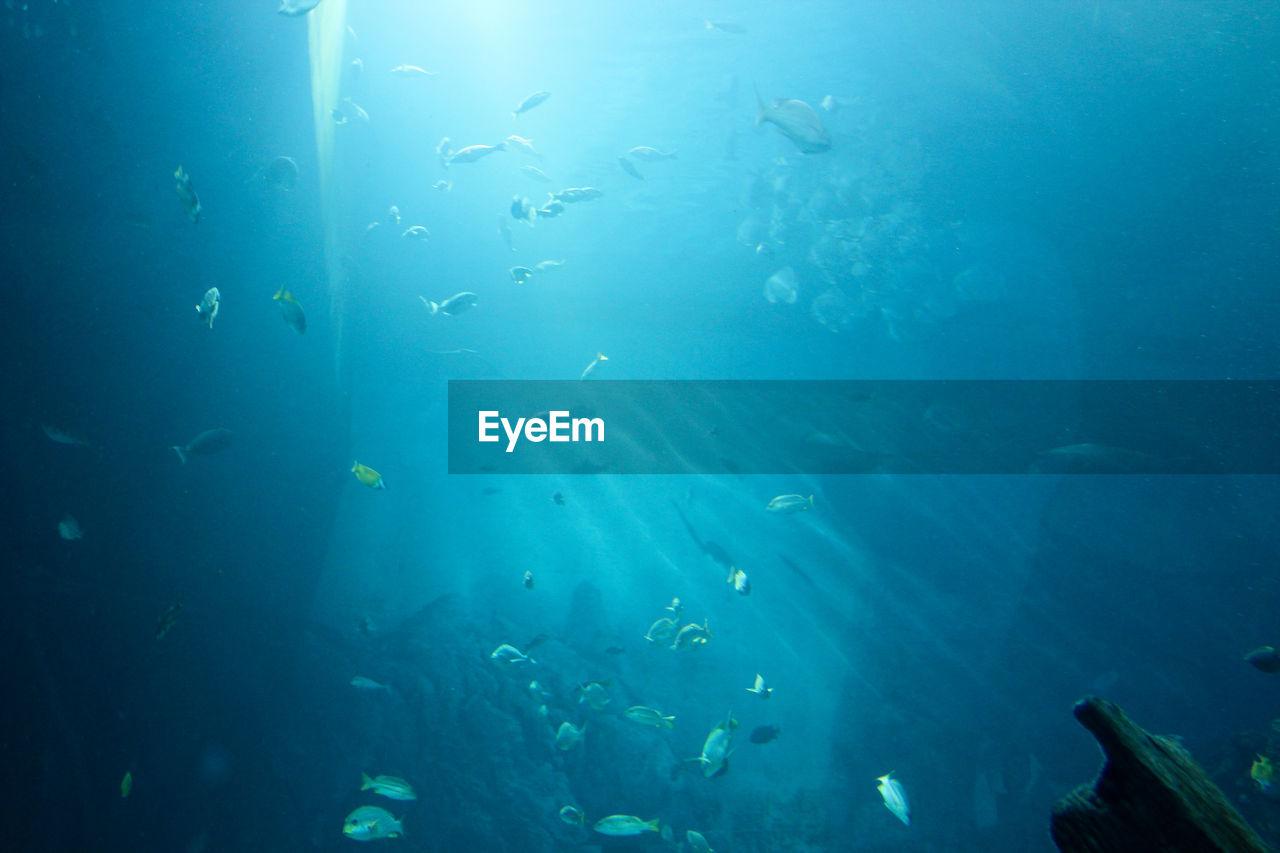 School of fish swimming in aquarium