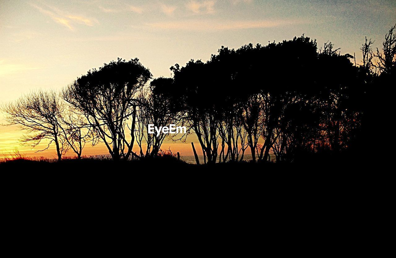 Silhouette Trees Growing On Field Against Sky During Sunset