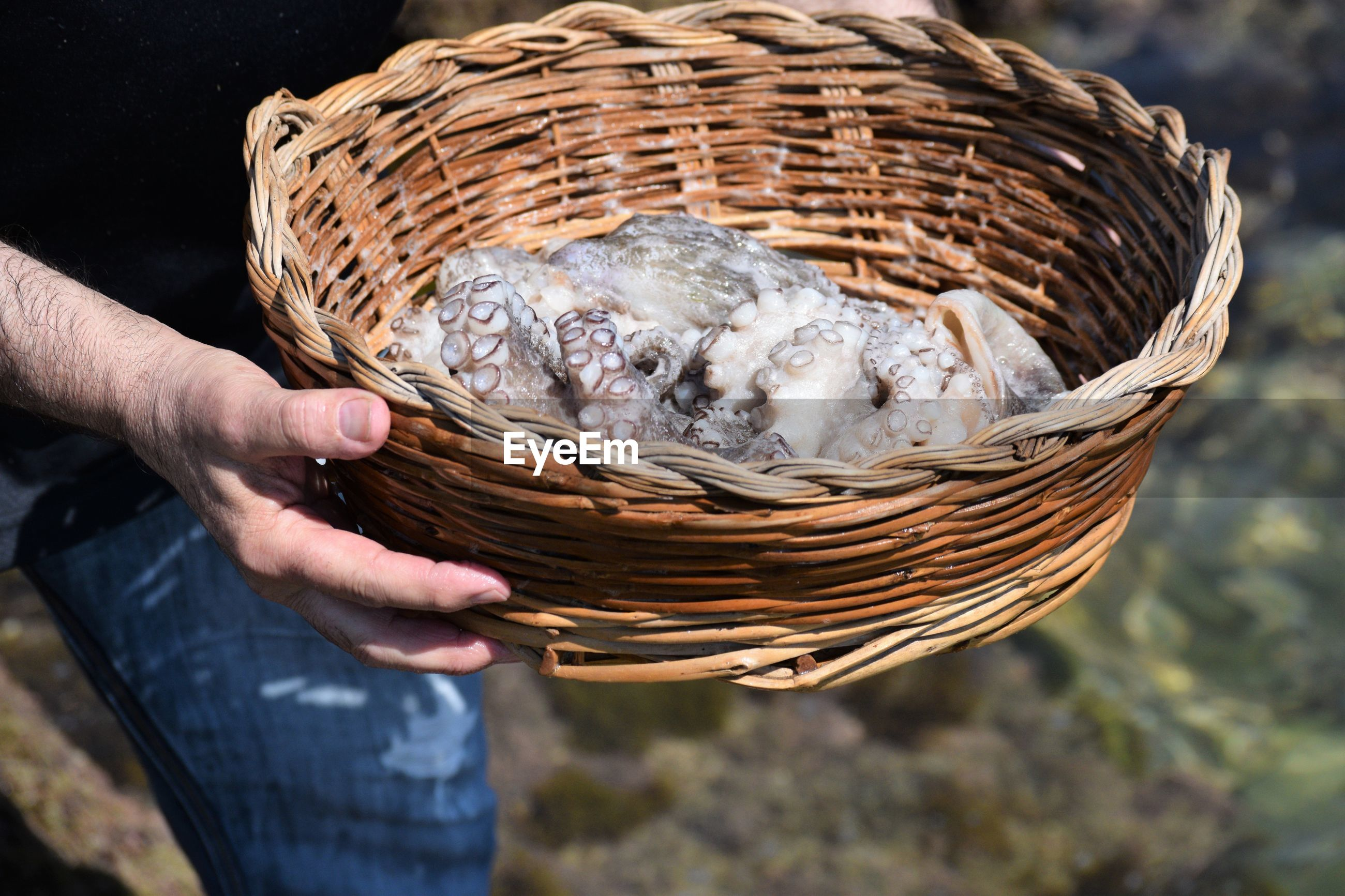 Close-up of man holding basket with octopus