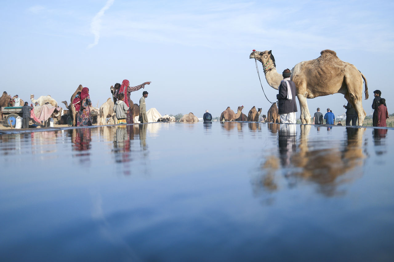 Camels And People By Artificial Pond At Pushkar Fair