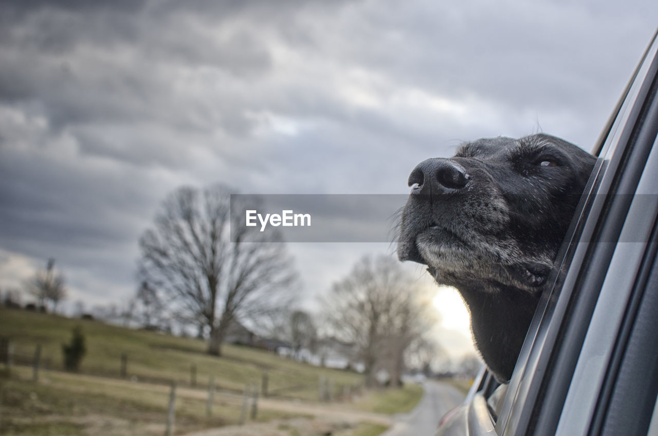 mammal, one animal, animal themes, animal, domestic, domestic animals, pets, canine, dog, vertebrate, cloud - sky, no people, sky, looking, animal body part, animal head, close-up, day, selective focus, nature