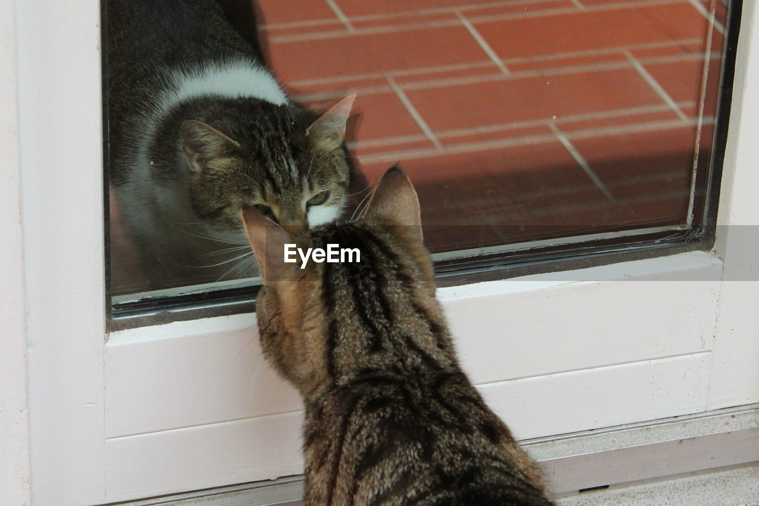 Tabby looking cat through glass door