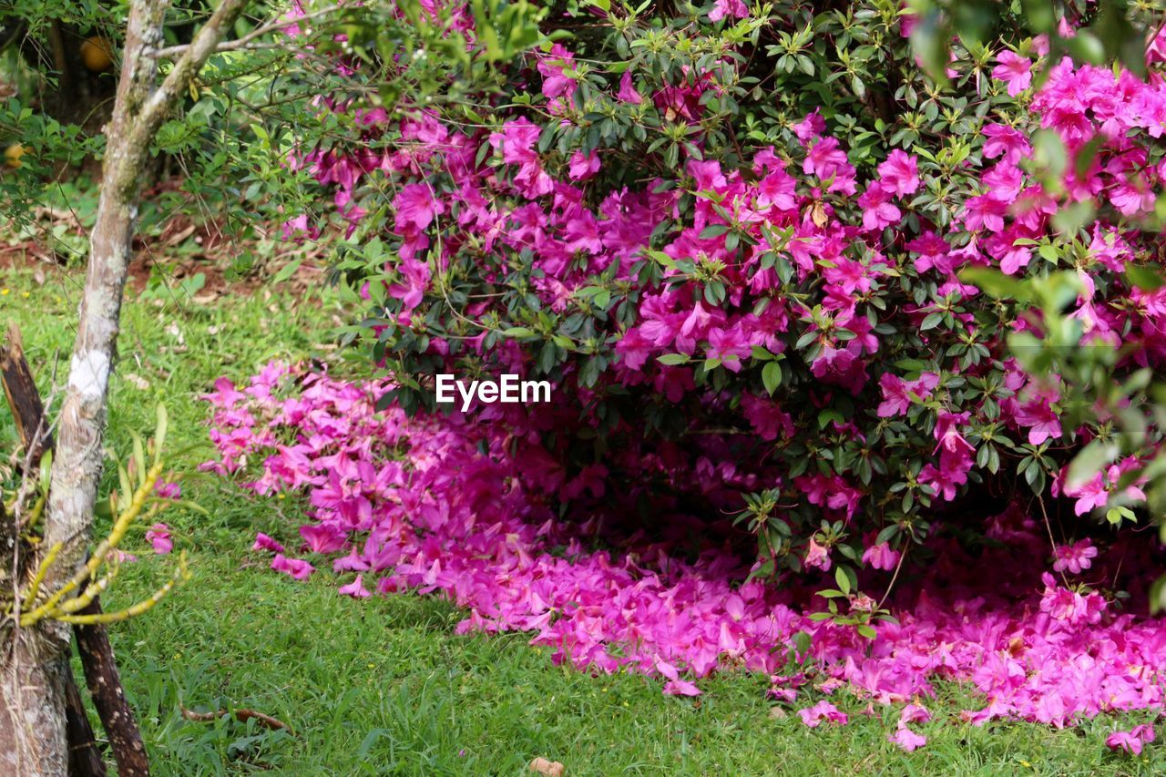growth, purple, flower, pink color, nature, no people, plant, outdoors, grass, day, beauty in nature