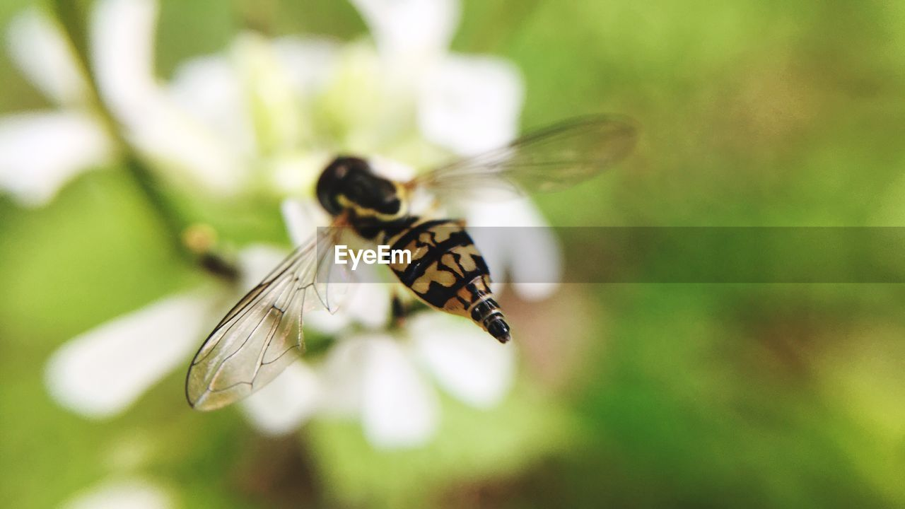 insect, animal themes, one animal, animals in the wild, focus on foreground, close-up, no people, animal wildlife, butterfly - insect, nature, plant, outdoors, day, spread wings, beauty in nature