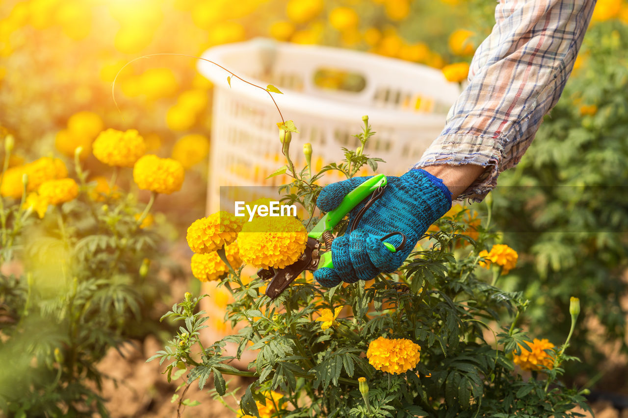 plant, flower, flowering plant, growth, nature, day, one person, one animal, focus on foreground, freshness, beauty in nature, animal wildlife, selective focus, close-up, animal, real people, holding, human hand, animals in the wild, fragility, hand, outdoors, flower head, finger
