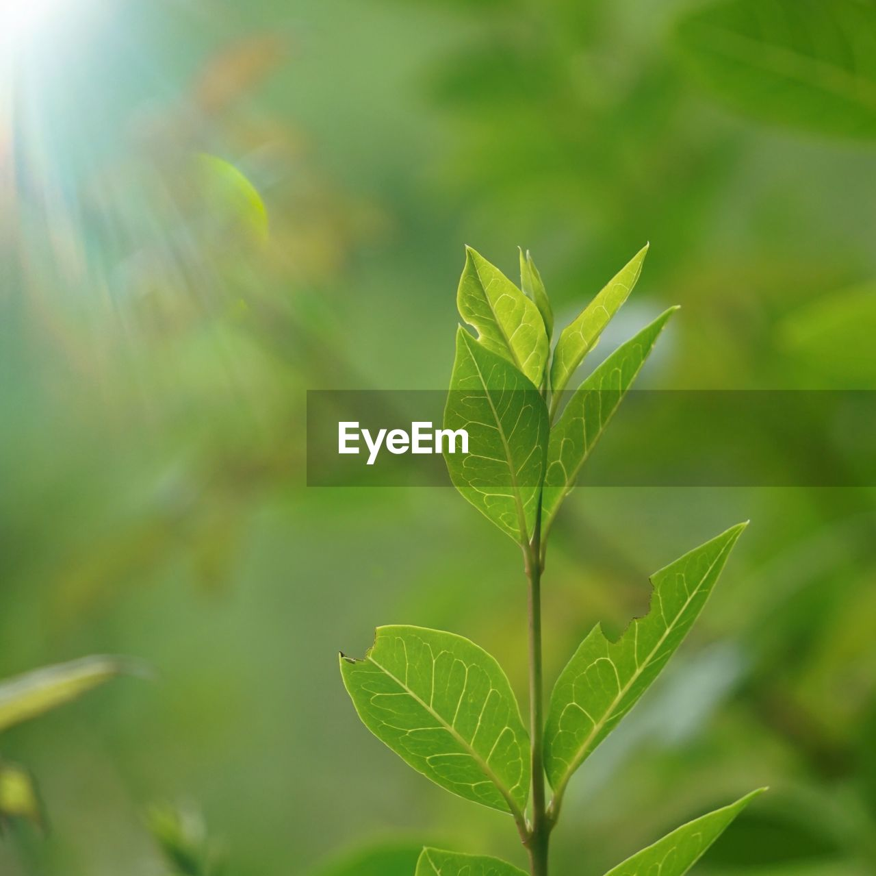 leaf, plant part, green color, plant, growth, nature, beauty in nature, close-up, day, focus on foreground, no people, outdoors, tranquility, leaf vein, leaves, fragility, sunlight, selective focus, vulnerability, botany
