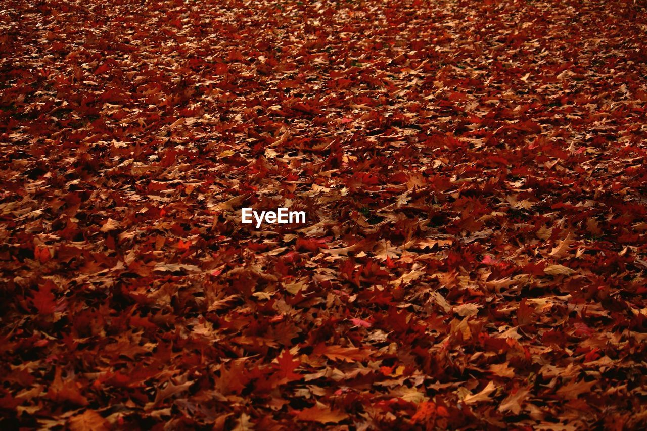 autumn, leaf, change, backgrounds, dry, full frame, brown, nature, textured, red, maple, no people, close-up, beauty in nature, day