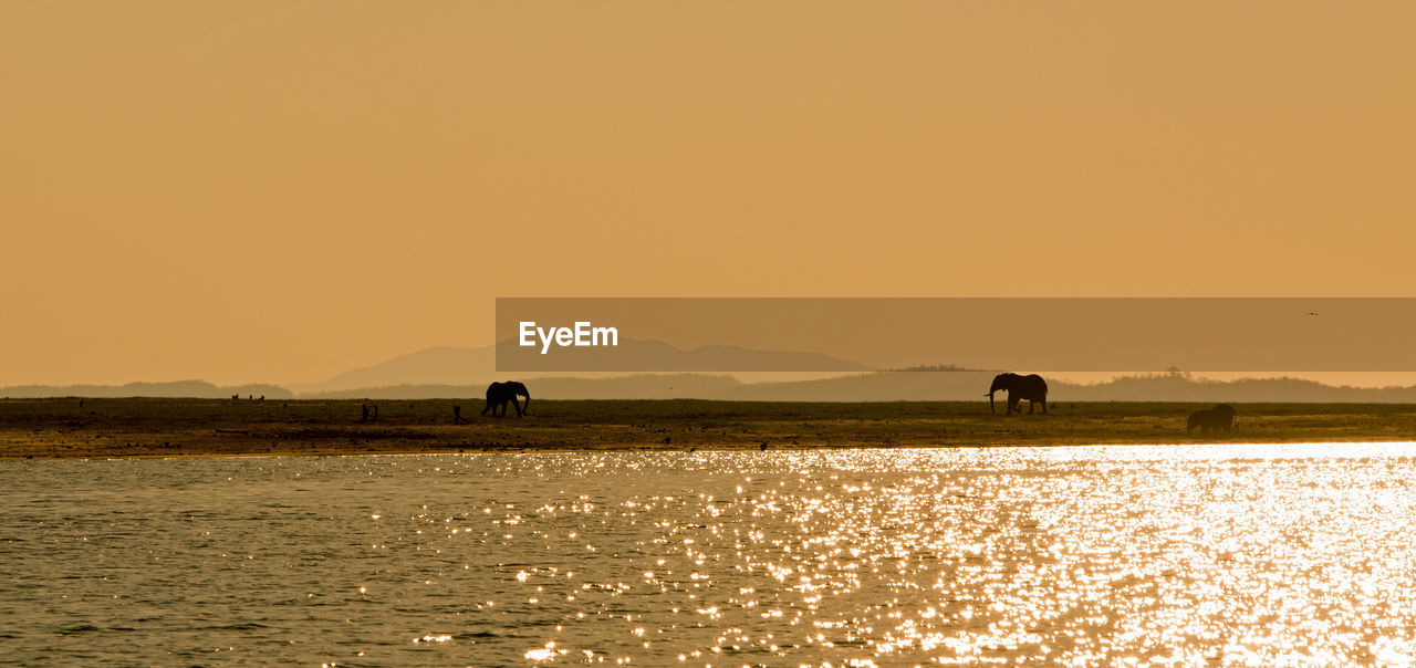 Silhouette Animals On Beach Of Lake Kariba Against Clear Sky During Sunset
