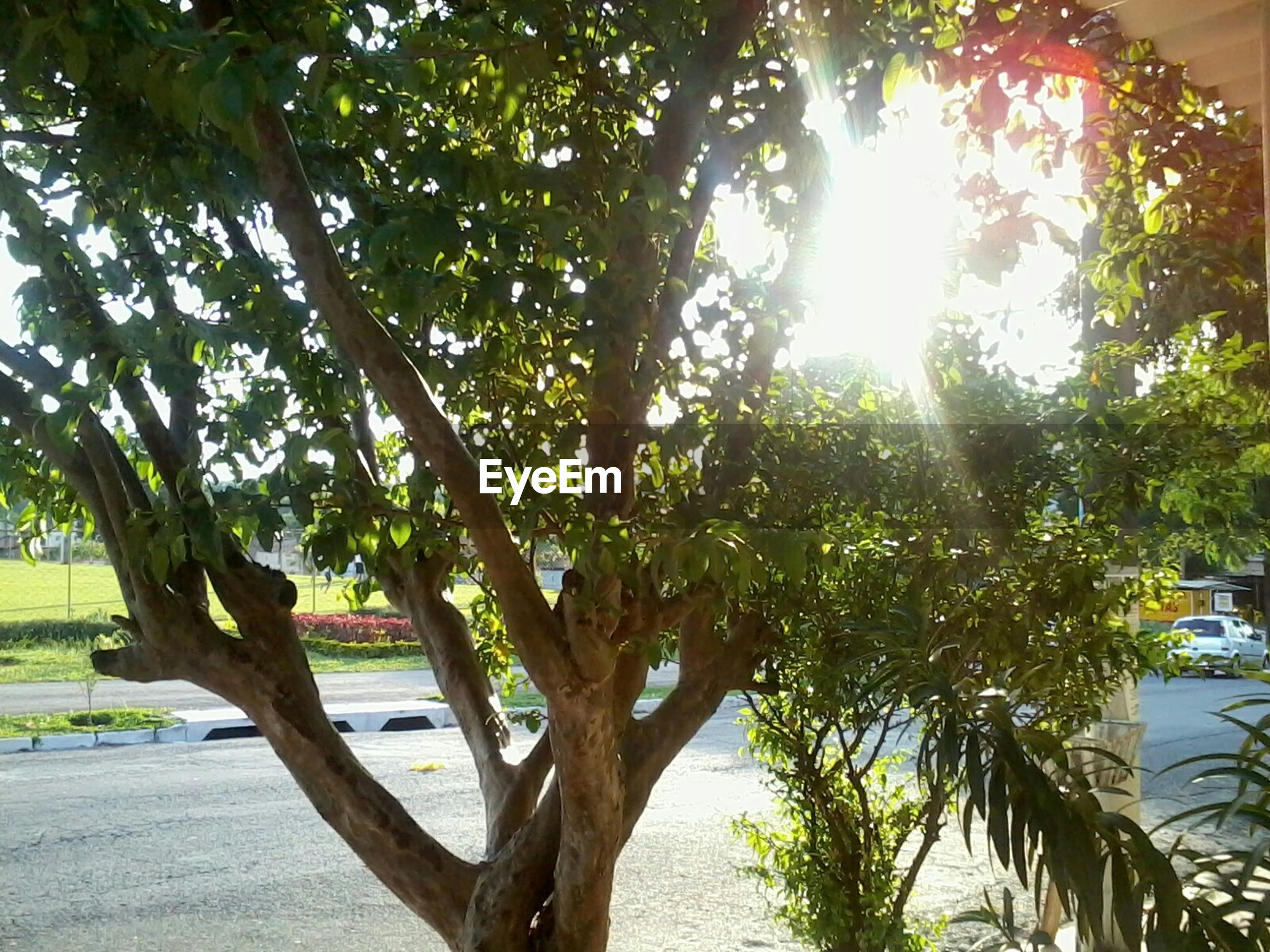 tree, sunlight, sun, tree trunk, growth, tranquility, nature, tranquil scene, sunbeam, beauty in nature, water, scenics, palm tree, branch, sky, lens flare, sunny, green color, shadow, day