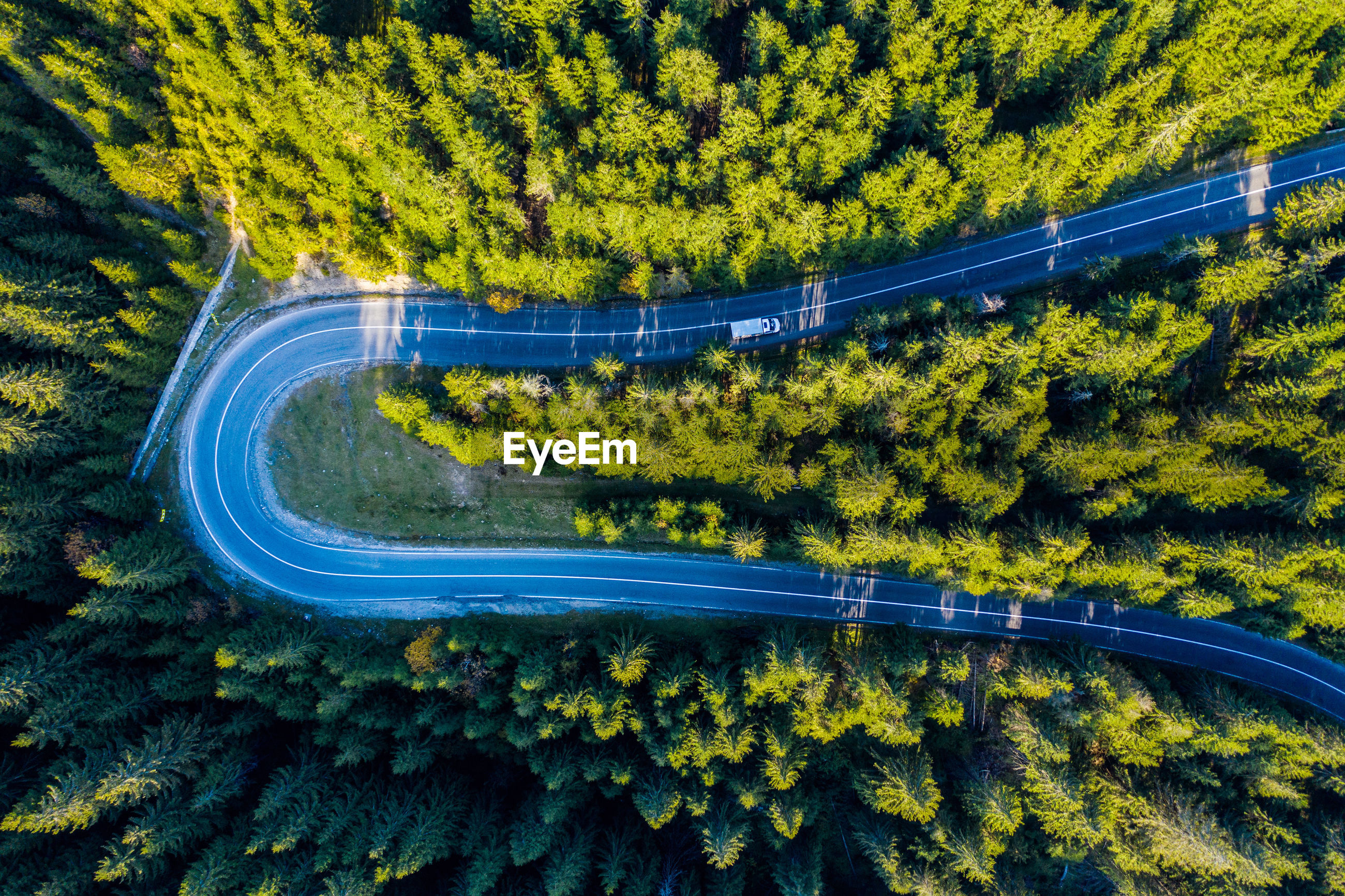 Directly above shot of road amidst trees in forest