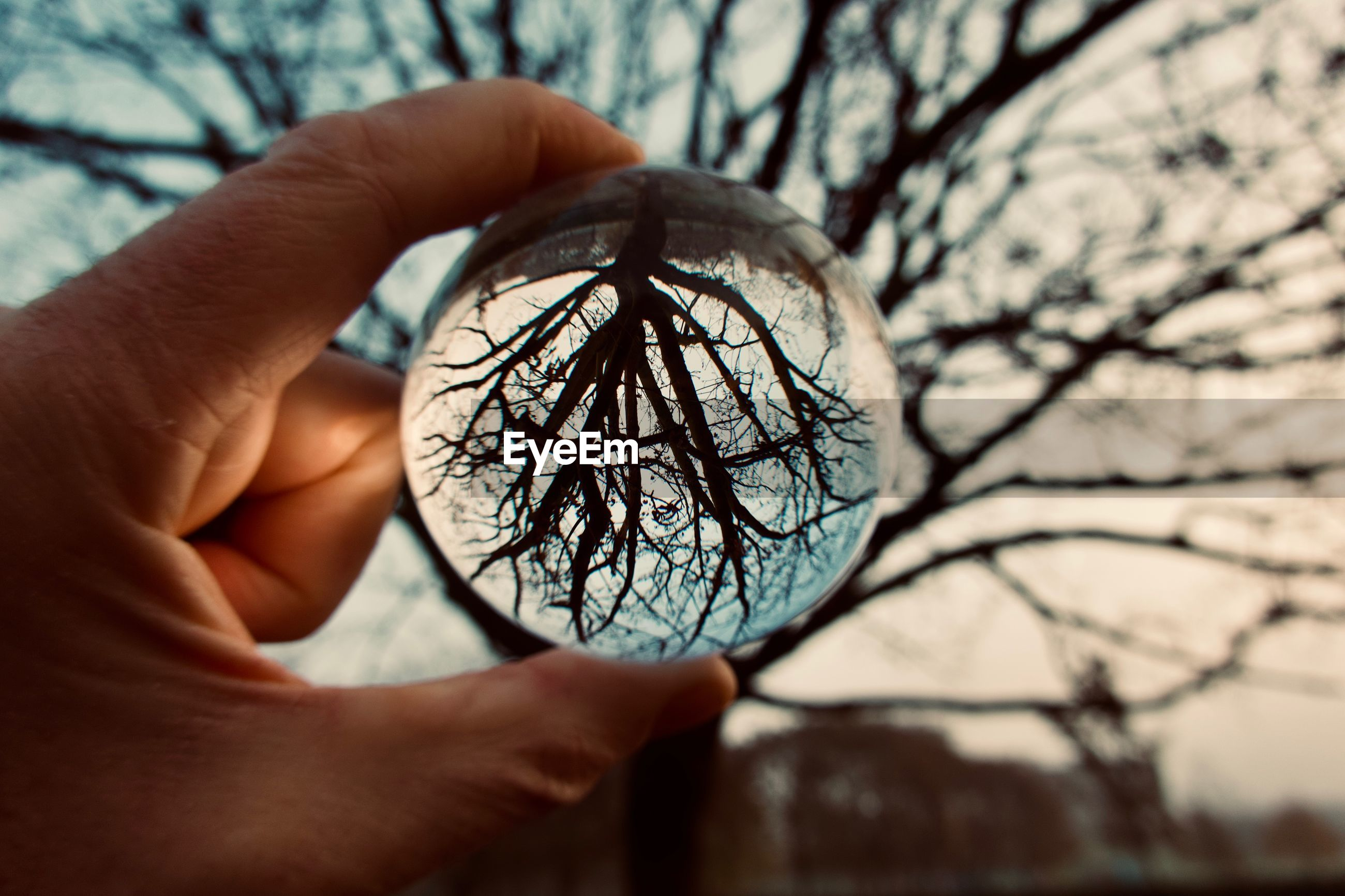 Close-up of hand holding crystal ball against bare tree during sunset