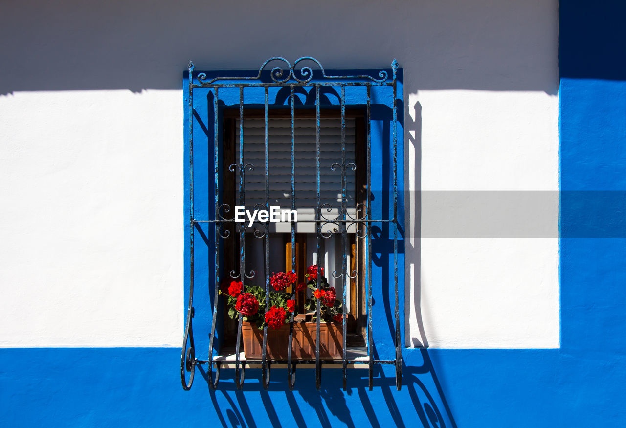 Potted plants at window on building