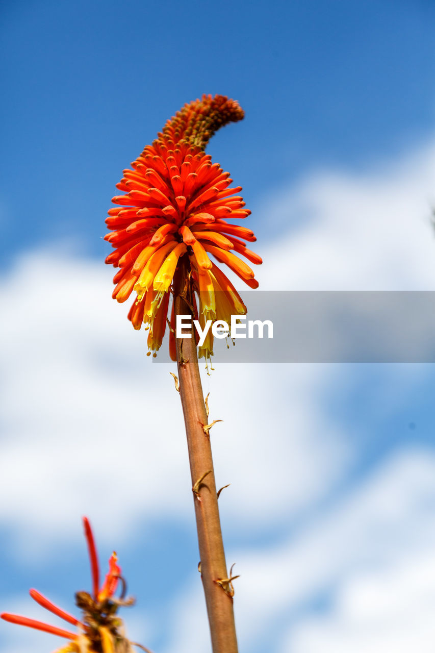 flower, growth, nature, fragility, beauty in nature, plant, day, outdoors, freshness, flower head, no people, petal, close-up, sky