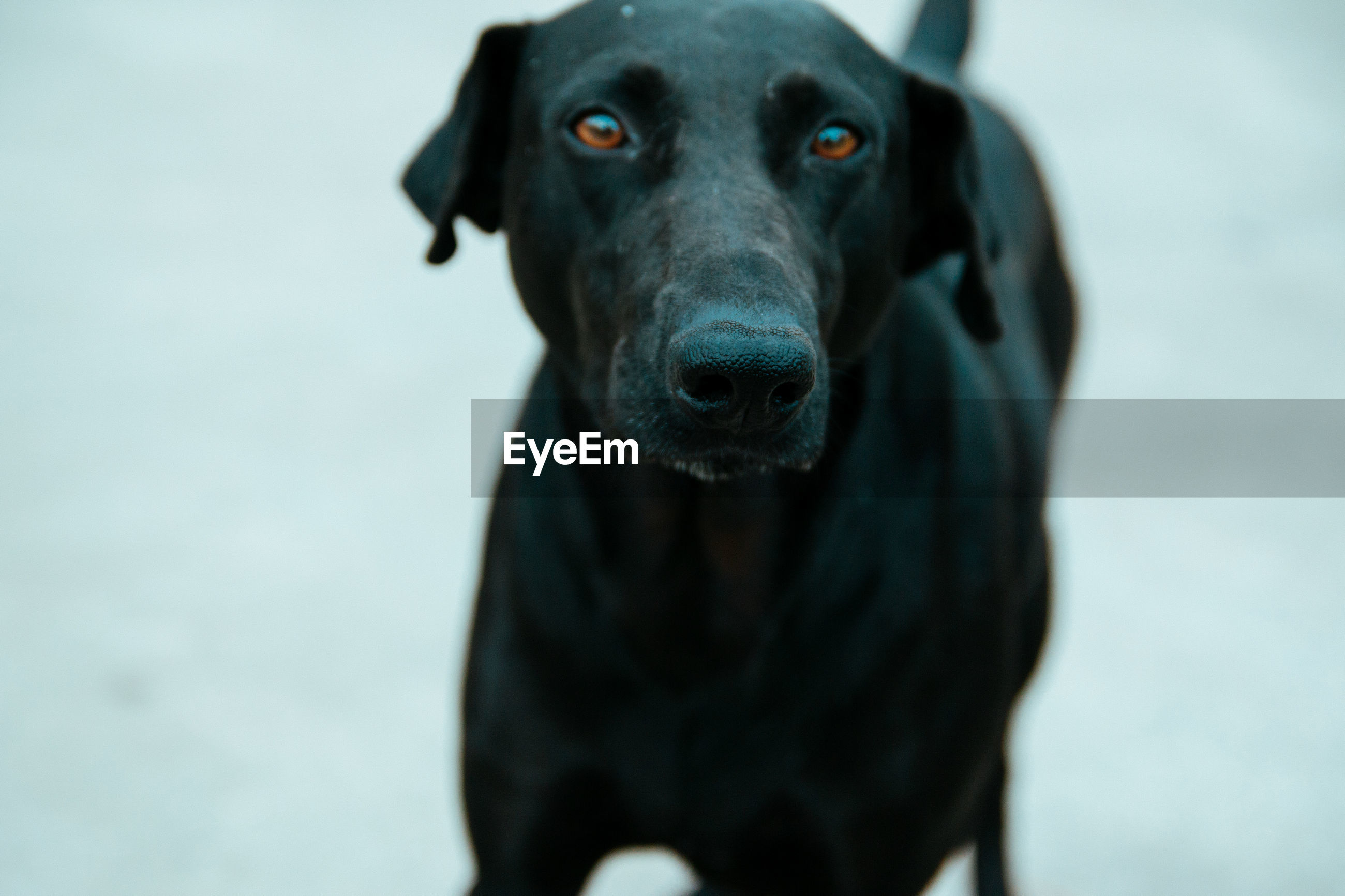 CLOSE-UP PORTRAIT OF BLACK DOG OUTDOORS