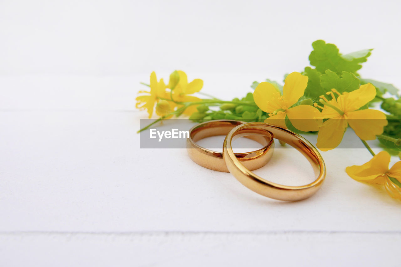 white background, flower, flowering plant, studio shot, still life, jewelry, ring, plant, close-up, indoors, love, wedding, no people, wedding ring, celebration, event, positive emotion, emotion, copy space, gold colored, flower arrangement
