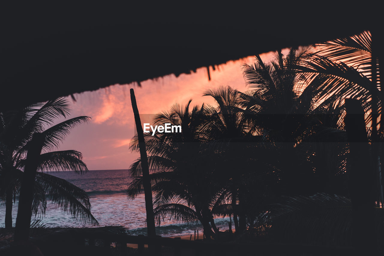 tropical climate, palm tree, tree, sunset, water, sky, nature, sea, silhouette, beauty in nature, plant, no people, tranquility, cloud - sky, beach, tranquil scene, scenics - nature, growth, outdoors, horizon over water, coconut palm tree, palm leaf