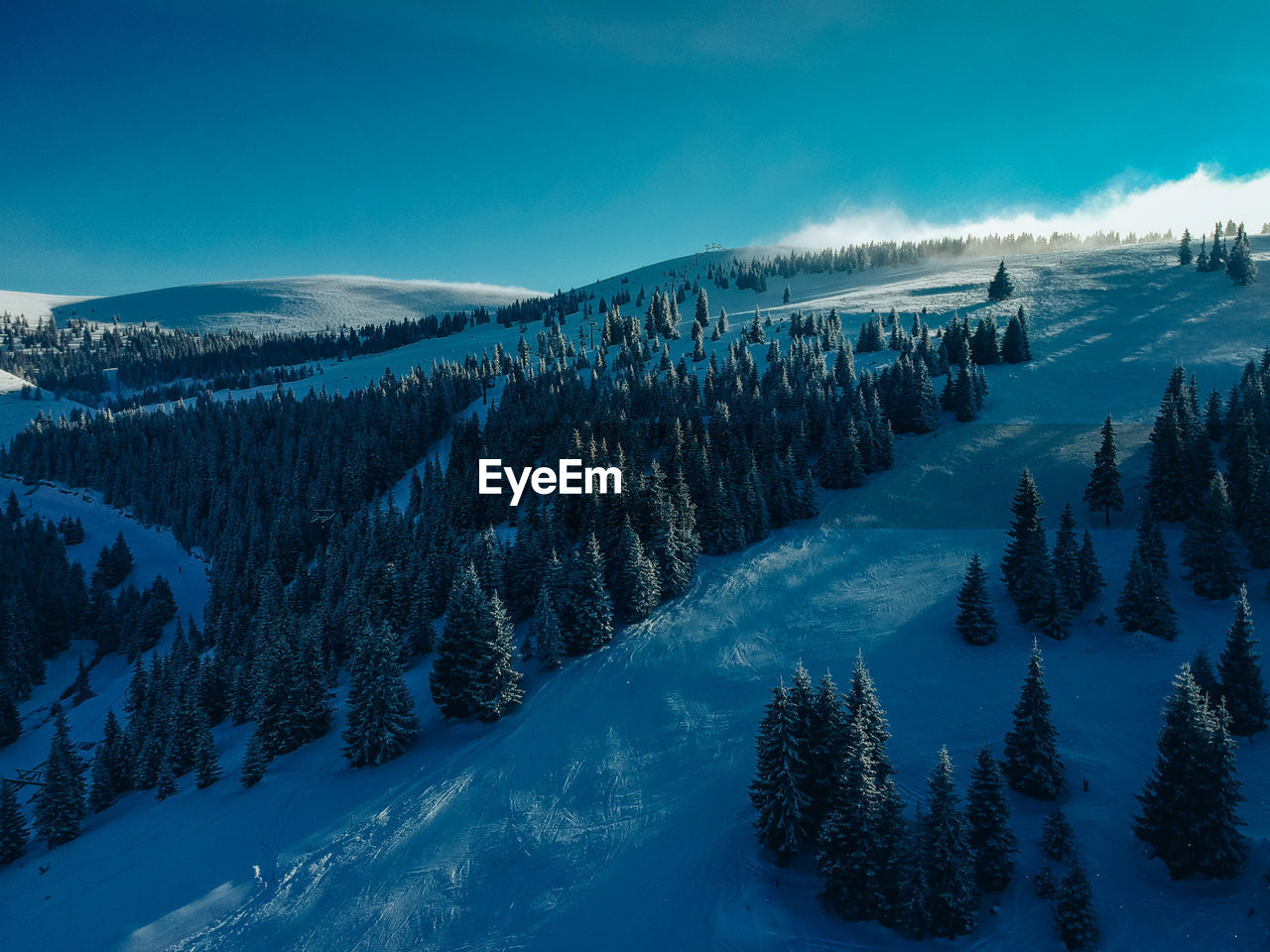 Panoramic View Of Pine Trees On Snowcapped Mountains Against Sky