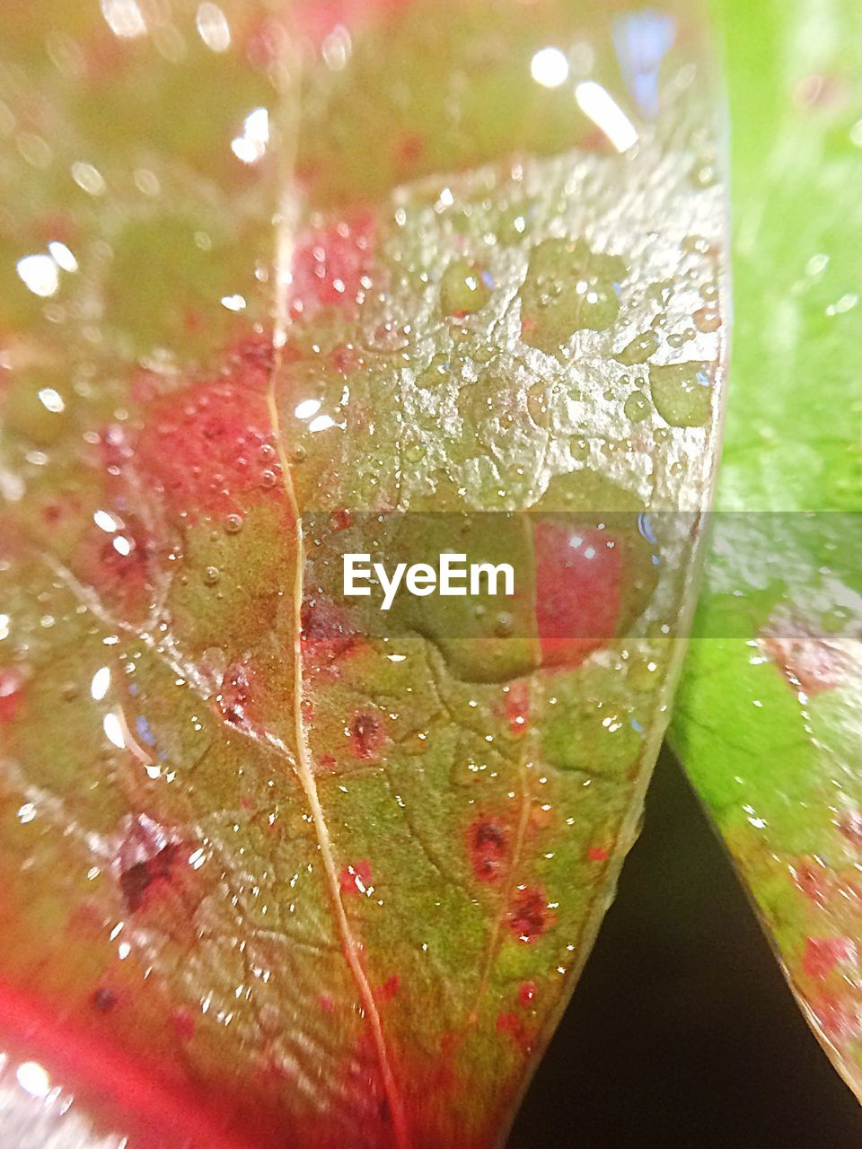 leaf, close-up, freshness, water, no people, green color, drop, day, nature, growth, indoors, beauty in nature