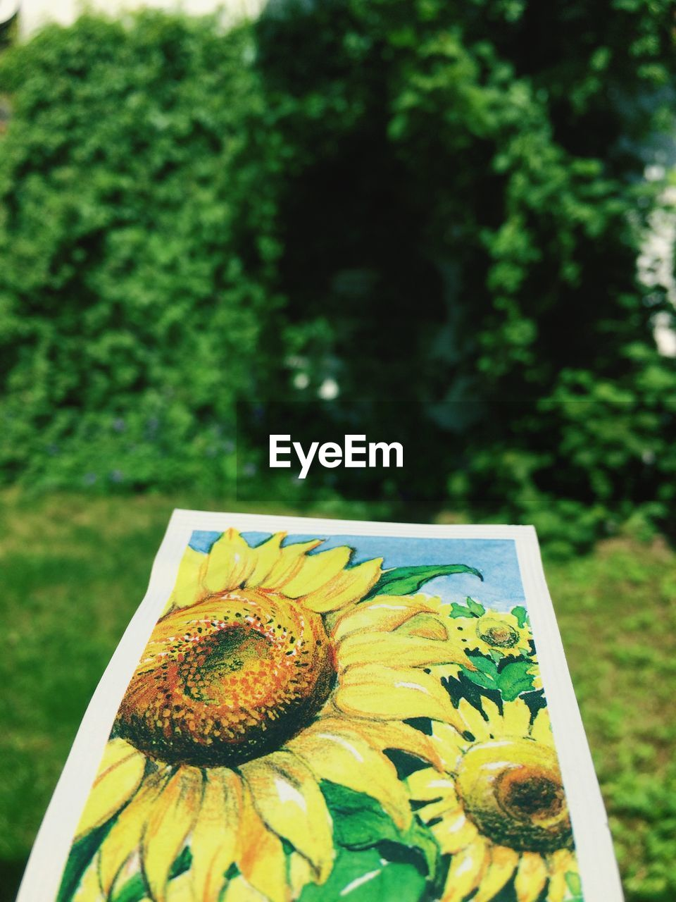 no people, close-up, focus on foreground, day, freshness, fruit, outdoors, nature, food, tree, healthy eating, flower, flower head