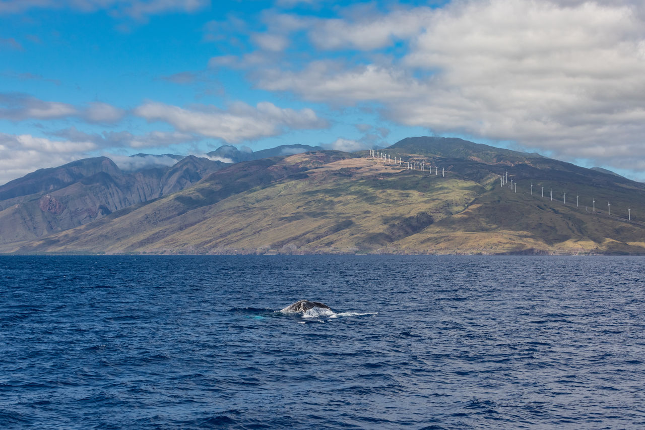 water, mountain, sky, animal themes, cloud - sky, animal, animals in the wild, mammal, sea, scenics - nature, animal wildlife, beauty in nature, one animal, aquatic mammal, whale, no people, nature, vertebrate, day, mountain range, marine, humpback whale, outdoors, tail fin
