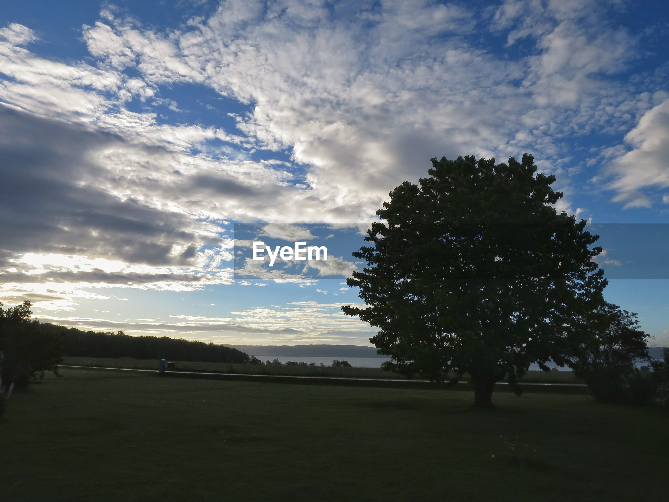 tree, sky, cloud - sky, nature, field, beauty in nature, tranquil scene, tranquility, no people, scenics, landscape, outdoors, growth, sunset, grass, day