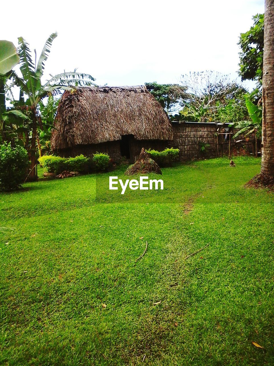 grass, green color, thatched roof, no people, day, field, growth, outdoors, nature, tree, beauty in nature, built structure, landscape, clear sky, building exterior